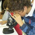 usare il microscopio