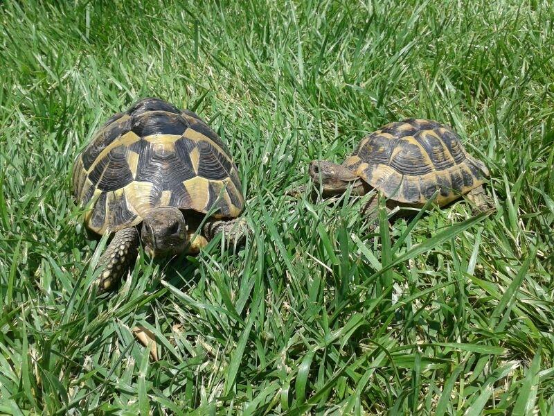 tartarughe in giardino programmanatura On tartarughe in giardino