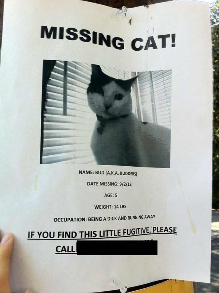 Lost Cat Funny Racoon